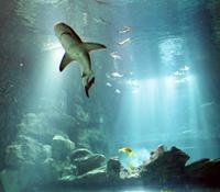 エッフェル塔にある水族館Aquarium de Paris Cineaqua